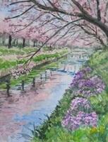 海老川の桜.jpg